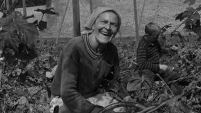 alpha-retro: Hopfen aus der Hallertau (1964)