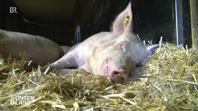 nano: Tierwohl bis zum Ende Rettung für die Kastanie
