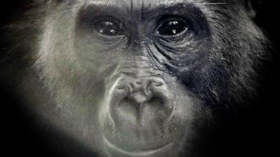 Gute Nachrichten vom Planeten: Wie wir die Natur schützen