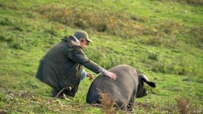 Fokus Europa: Großbritannien: Naturwald statt englischer Rasen