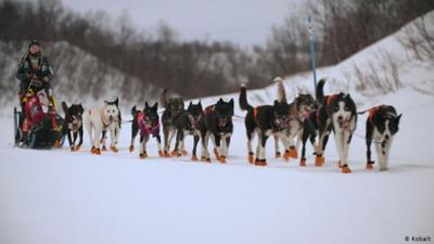 Nahaufnahme: Das härteste Rennen Europas - Mit dem Schlittenhund durch Norwegen