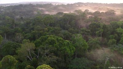 Nahaufnahme: Können Afrikas Wälder der Welt helfen?