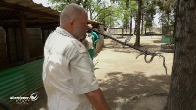 Abenteuer Leben: Donnerstag: Der Schlangenmann von Simbabwe