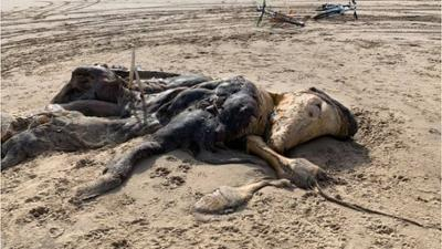 Natur und Mensch: Angespültes Tiefsee-Monster stellt Experten vor ein Rätsel