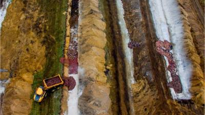 Natur und Mensch: Gräber nicht tief genug: Dänemark kämpft gegen Zombie-Nerze