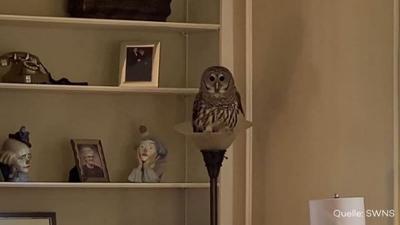 Natur und Mensch: Ungebetener Gast: Eule macht es sich in Wohnzimmer gemütlich