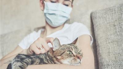 News & Trends: Erstmals infizierte Haustiere in Deutschland gemeldet
