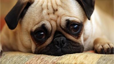 News & Trends: Ist mein Haustier einsam? Auf diese Alarmsignale musst du achten!