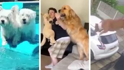 News & Trends: 3 lustige Hunde-Clips zum Totlachen