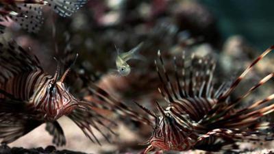 Wunderwelt Ozean: Lebensraum Riff