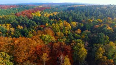 phoenix vor ort: Nachhaltig bewirtschafteter Wald ist gelebter Klimaschutz
