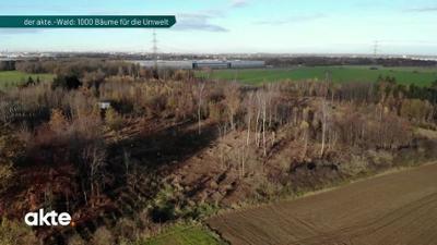 AKTE: Der Akte-Wald: 1000 Bäume für die Umwelt