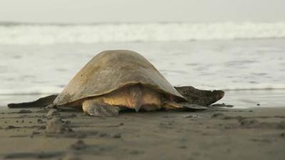 AKTE: Die Schildkrötenretterin