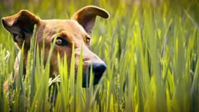 Terra X: Der Hund - Der erste Freund des Menschen